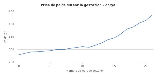 RLF-PAZ Zorya xXx RMM Xolotl 968516000000016041